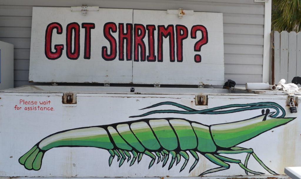 Fresh Shrimp Tank